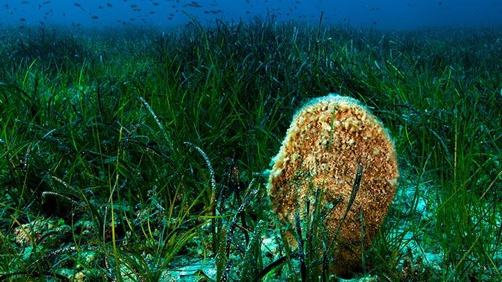 Deniz Bilimleri Kampı